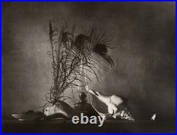 1959/80 Original Josef Sudek Silver Gelatin Photo Seashell Still Life Caravaggia
