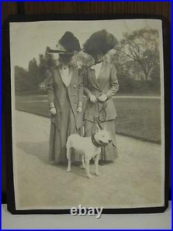 Antique Edwardian Lady Dog Day White American Bull Terrier Folk Art Collar Photo
