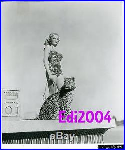 GENE TIERNEY Vintage Original Photo 1954 The Egyptian Sexy Leopard Babe Cat