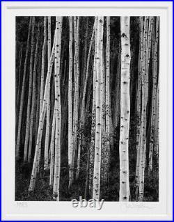 John Sexton Original 1983 Aspens At Dusk, Near Aspen Colorado 5.5x7 Photograph