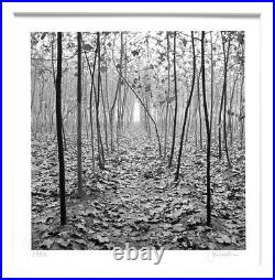 John Sexton Signed Original 1984 Forest In Mist, Xi'an, China 6.5x6.5 Photograph
