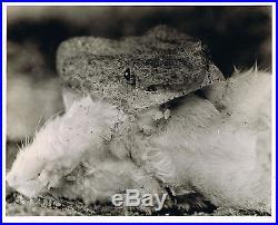 Margaret Bourke White Vintage Stamped PM Magazine Photo 8x10 Life Photographer