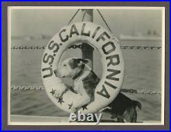 PETE THE PUP Our Gang Dog Portrait 1924 ORIGINAL The Buccaneers USS California