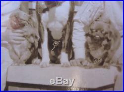 Vintage Antique American Pitbull Terrier Pekingese Paducah Ky Tampa Fl Photos