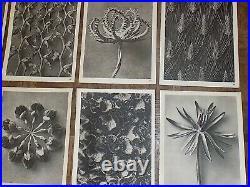 Vintage Botanical Photogravures-Karl Blossfeldt-Set of 12