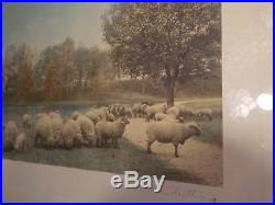 Vintage WALLACE NUTTING Hand Colored Photo of Sheep A Warm Spring Day Signed