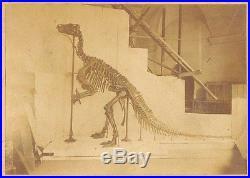 Vintage original foto photo first dinosaur skeleton rebuild ever Brussels 1885